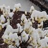 「佐久の季節便り」、「春のドカ雪」、積雪は20センチ以上、降水量35ミリ…。