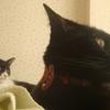今日の黒猫モモ&白黒猫ナナの動画ー522