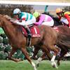 【中山記念2018】予想オッズ・出走馬分析〜ペルシアンナイトG1馬の意地を見せるか