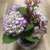 【母と暮らせば】花いっぱい