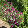 花と緑と水と人と。「カメラマン絵描き詩人に俳句詠み 初夏の公園みなアーチスト」