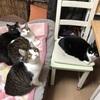 保護猫 多頭飼い 四猫になって、まもなく半年が経過します。