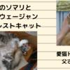 猫アルバム(2020年10月2週目) ~秋のソマリとノルウェージャンフォレストキャット~