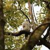 大きな入れ替わりなく順調に春を待つ野鳥達(大阪城野鳥探鳥 2017/02/18 6:30-13:25)