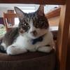 我が家の猫あるあるシリーズパート3