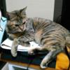【悲報】うちのPS4がネコの寝床になっていた件、ほか