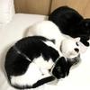 【子供とやりたいSGDs】ズボラ猫も?ソファーに寝たままできること
