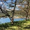 琵琶湖マキノから海津並木までウオーキング