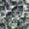 DCGANで植物の葉画像を生成してみたon Keras