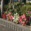 夏の花たち