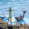 2020年10月 名古屋&常滑旅行 4日目後半 名古屋水族館・イワシトルネードショーは必見です!