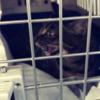 【猫】ハマグリが我が家に来た日