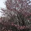 春を見に*❀٭ (*゚▽゚*) Part2