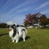 紅葉が進んだ汐入公園をペットと散歩