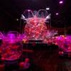 アートアクアリウム美術館が常設開業したので早速行ってみた感想