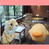 【強羅温泉】箱根旅行【月の泉】