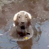 泥沼に夢中のわん公!どっぷり漬かって出てきやしない?