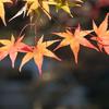 紅葉シーズンの京都三尾(神護寺・西明寺・高山寺)を歩いたので駐車場と混雑状況を教えるよ