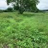 長雨の後の草刈り -その2-