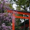 城南宮 境内の枝垂れ梅