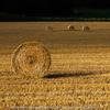 大空町女満別で出会った麦わらロールのある風景。
