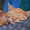 入浴で体温をコントロールすればぐっと深く眠れる/「スタンフォード式 最高の睡眠」