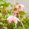 今日の桜 03/09