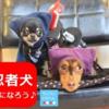 10月18日(日)「カリスマ添乗員 平田進也氏同行!! 忍者犬になろう♪」