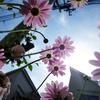 生駒山上へ自宅からトレイルラン #1