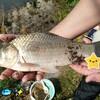 【鯉釣りブログ】鯉 ともソーシャルディスタンスΣ(゚Д゚)