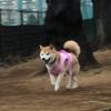 燦という名の小狗