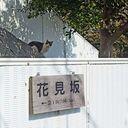 神戸サクラ通信その9「会下山公園の桜、まだ1分咲きもいってないですかね」
