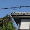 屋根のルートセールが見つけた倒れている鬼瓦