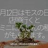 815食目「3月12日はモスの日。店頭に行くとミニにんじんの種がもらえます。」3月12日、3月13日の2日間先着順!