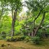 たまには国内 京都の初夏
