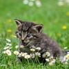 猫好きにはわかるかも?!「猫のフシギな習性」