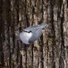 森の小鳥さん
