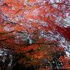 紅葉散歩 六義園のライトアップ