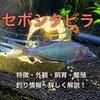 セボシタビラの特徴・外観・飼育・繁殖・釣り情報を詳しく解説!
