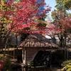 水車と紅葉(親水公園)