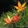 【終盤の紅葉でクリエイト】東京都立殿ヶ谷戸庭園
