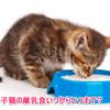 子猫の離乳食いつからいつまで?量や作り方は?
