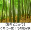 毎年どこかで100年に一度の竹の花が咲いたってニュース聞くんだが・・・
