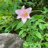 花の浅草岳と守門岳①