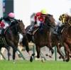 11月1日 東京競馬 注目馬