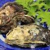 『天然岩牡蠣』美味しいですね!