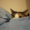 【愛猫日記】毎日アンヌさん#304