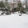 桜じゃない 吹雪!
