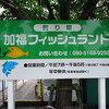 【加福フィッシュランド】愛知県で自然が感じられる貴重な釣り堀 竿をレンタルして800円で一日遊べちゃう