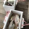 〈その1126〉魚釣り